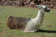 20050505_Cusco-13