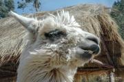 20050505_Cusco-14